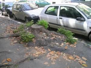 Moncone di albero a via Aimome
