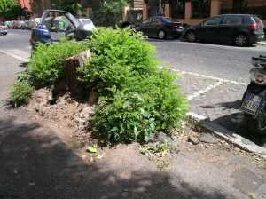 Moncone di albero a via Aimone
