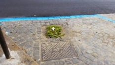 Tra un pò forse crescerà un albero sulla caditoia ostruita