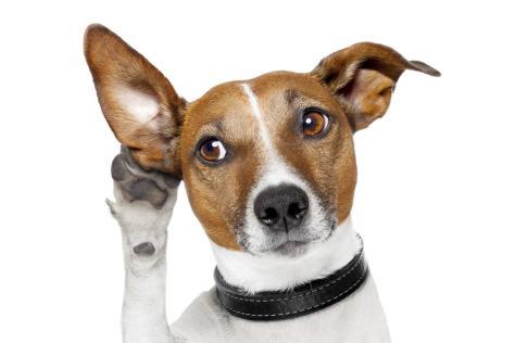 hearing-dog