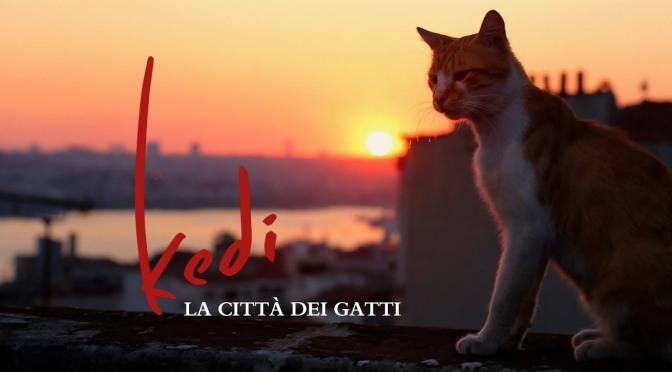 """Da giovedì 5 luglio 2018 """"Kedi, la città dei gatti"""" all'Apollo 11"""