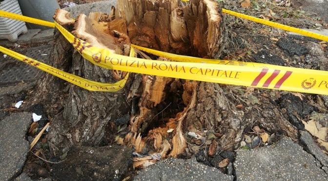 All'incrocio tra viale Manzoni e via Giolitti addio all'albero che era lì da decenni