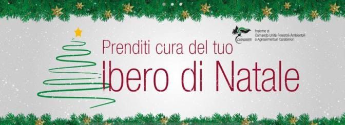 Campagna informativa per restituire l'albero di Natale e le norme per smaltire quelli artificiali non più utilizzabili