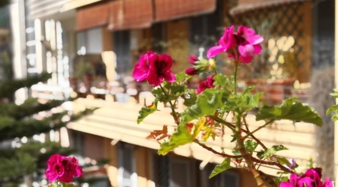 #IoRestoACasa ma esploro il balcone…