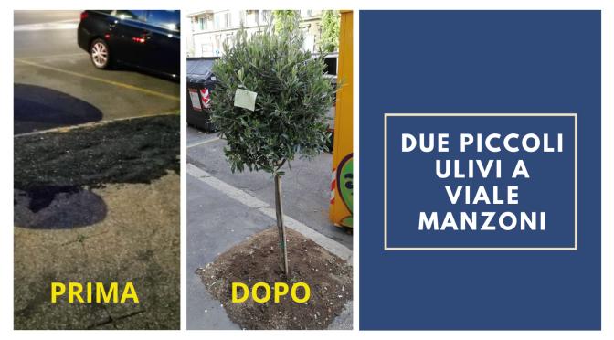 Una lodevole iniziativa a viale Manzoni. Residenti ed esercenti piantano 2 piccoli ulivi